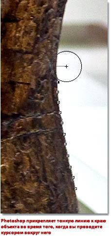 Инструмент магнитное лассо (Magnetic Lasso) в Фотошопе