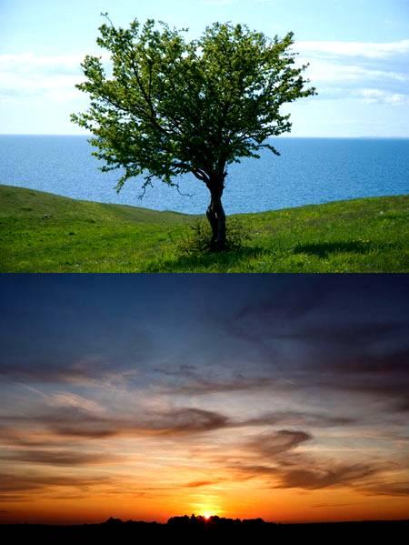 Как вырезать дерево за 3 минуты в Фотошопе