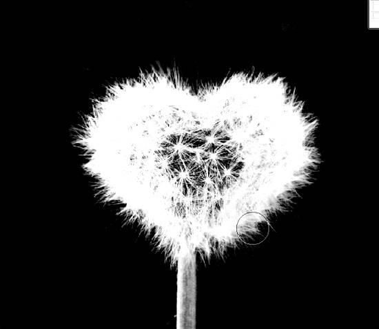 Создаем сердце из одуванчика используя Фотошоп