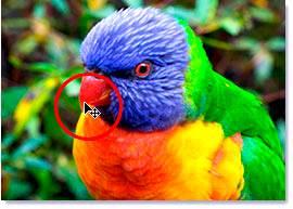 Наведение курсора мыши на кончик клюва птицы.