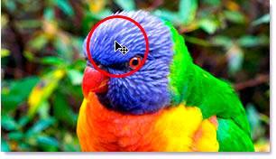 Наведение курсора мыши на точку в районе головы птицы.