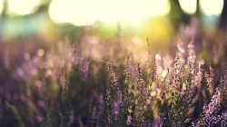 Добавляем эффект золотого заката на фото
