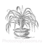 Кисти: силуэты деревьев для Фотошопа - кисть 1