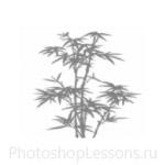 Кисти: силуэты деревьев для Фотошопа - кисть 2