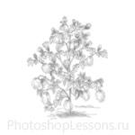 Кисти: силуэты деревьев для Фотошопа - кисть 32