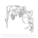 Кисти: силуэты деревьев для Фотошопа - кисть 33