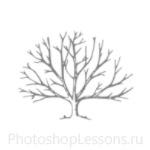 Кисти: силуэты деревьев для Фотошопа - кисть 42