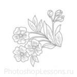 Кисти: цветочные орнаменты для Фотошопа - кисть 18