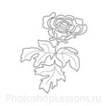 Кисти: цветочные орнаменты для Фотошопа - кисть 20