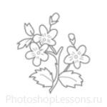 Кисти: цветочные орнаменты для Фотошопа - кисть 27